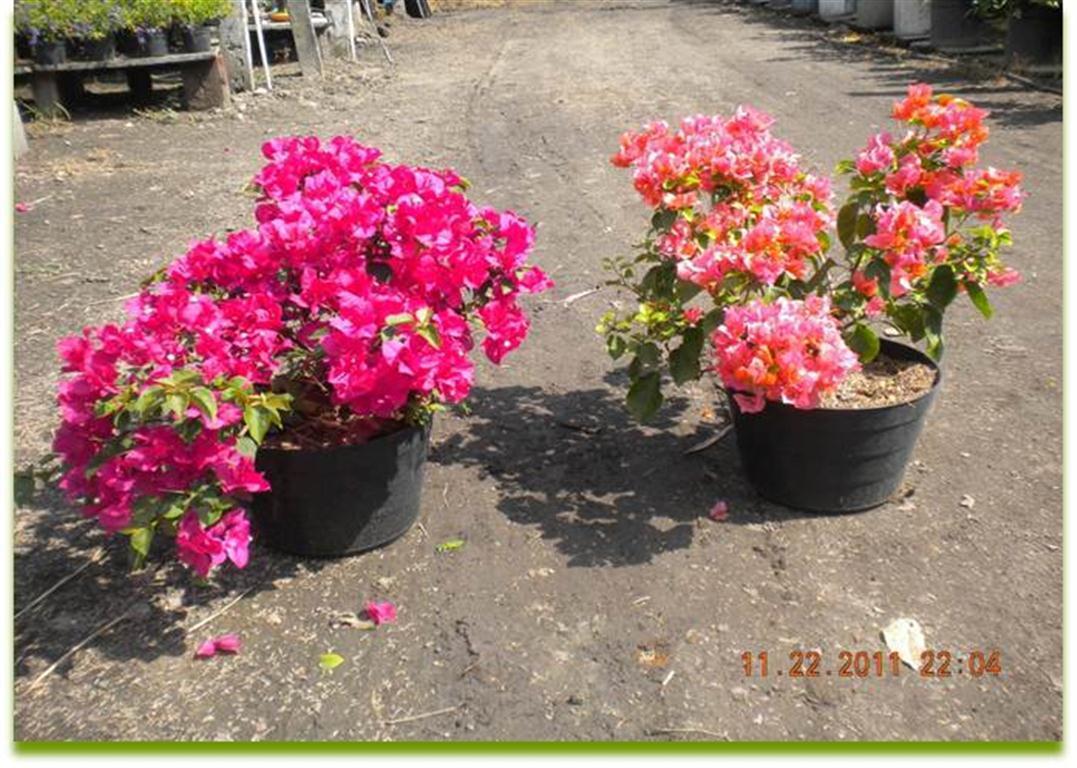 Plantas de exterior y sol for Plantas decorativas de exterior