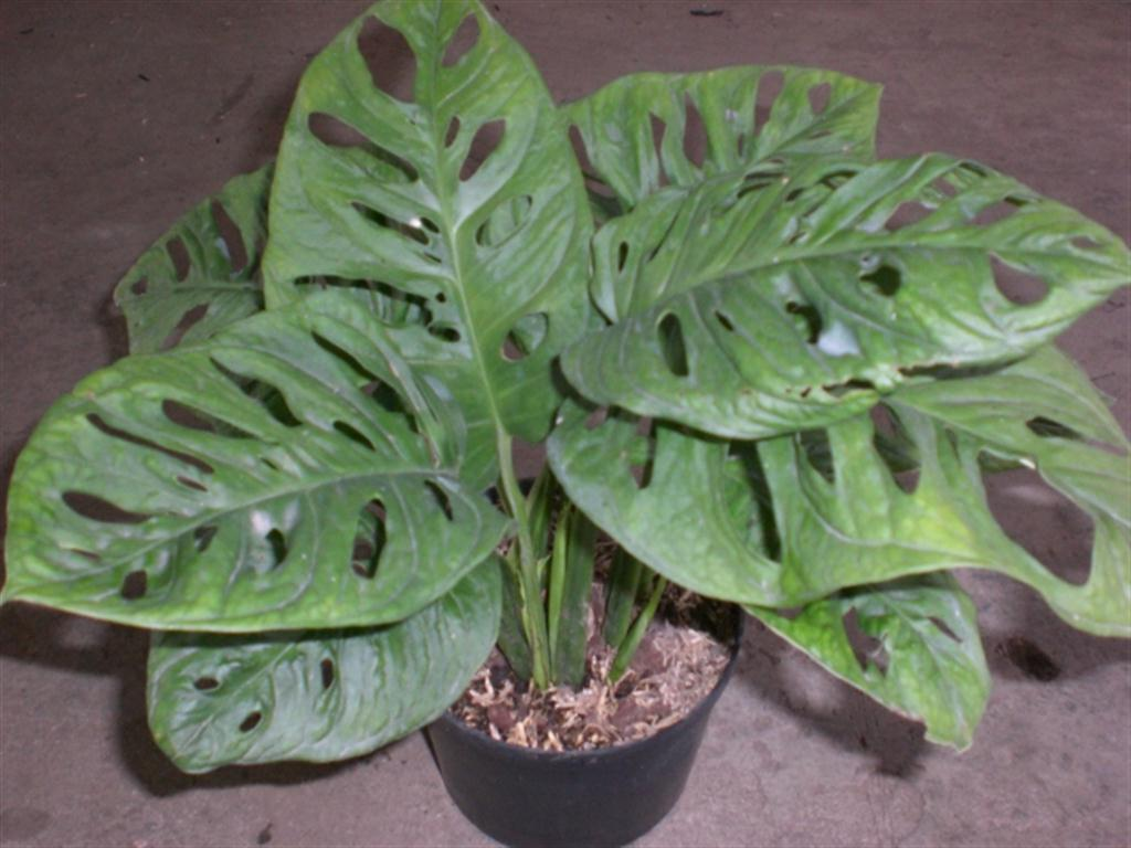 Vivero san francisco plantas ornamentales carrera 46b for Imagenes de viveros de plantas ornamentales