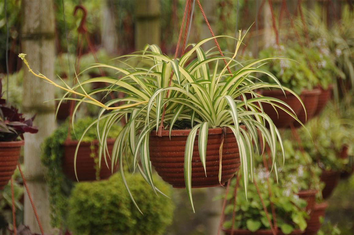 Plantas de exterior y sol for Plantas de exterior