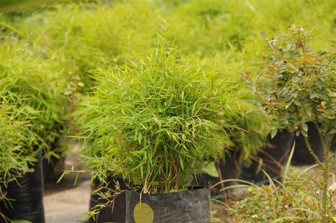Bambu planta exterior interior y exterior de plstico - Bambu planta exterior ...