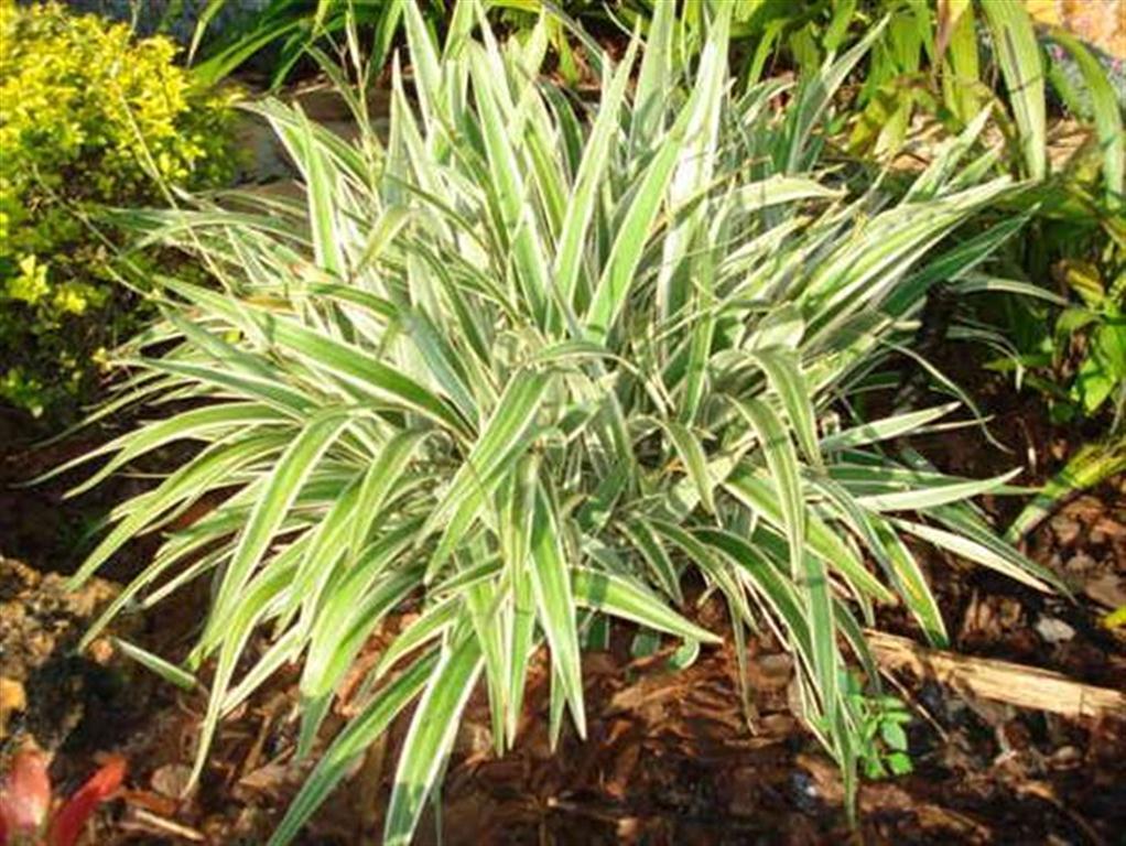 Plantas de exterior y sol - Plantas exteriores resistentes ...